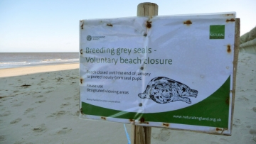grey-seals-beach-closure