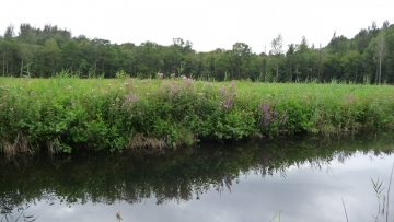 Sculthorpe Moor Community Nature Reserve, north Norfolk
