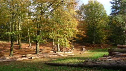 Autumn 2011 at Blickling Woods, Norfolk