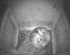 Tawny owl webcam at Sculthorp</a>Next to the car park, there&#8217;s a great visitor centre packed with lots of interesting information about the local wildlife and habitats. Then, after a slightly annoying walk down a stony path you arrive at zone 1 with raised wooden pathways flowing through wet woodlands.</p><p>Emerging from the woods, a &#8216;saw sedge wetland&#8217; beholds you&#8230; and whatever time of the year it is, there seems to always be something to spot. It&#8217;s a beautiful and tranquil place where quiet and respect are required. And&#8230;</p><p>They have a live &#8216;Owlcam&#8217; web feed! There were 4 eggs when I last looked. Can&#8217;t wait to see the chicks! Visit their web page at the Hawk and Owl Trust website to learn more: <a href=